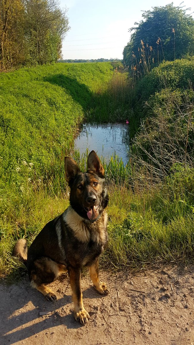 It was a busy night for PD Shadow and PD Kodi yesterday. Numerous searches and deployments across the force, ending with a suspect in custody and vehicle recovered for a serious collision in grimsby. Great team work by the SOU. @Humberbeat @CSuptCWilson @CCLeeFreeman