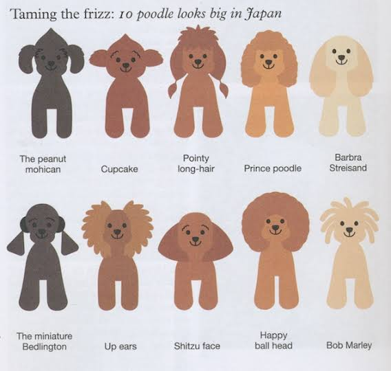 Pleasant Ceo Of Femboys On Twitter Artists Designing A Poodle Natural Hairstyles Runnerswayorg