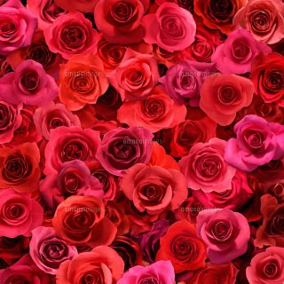 Thank you My dear friends💕💕💕 Enjoy your day💕💕💕 See you❤️ Good Night❤️