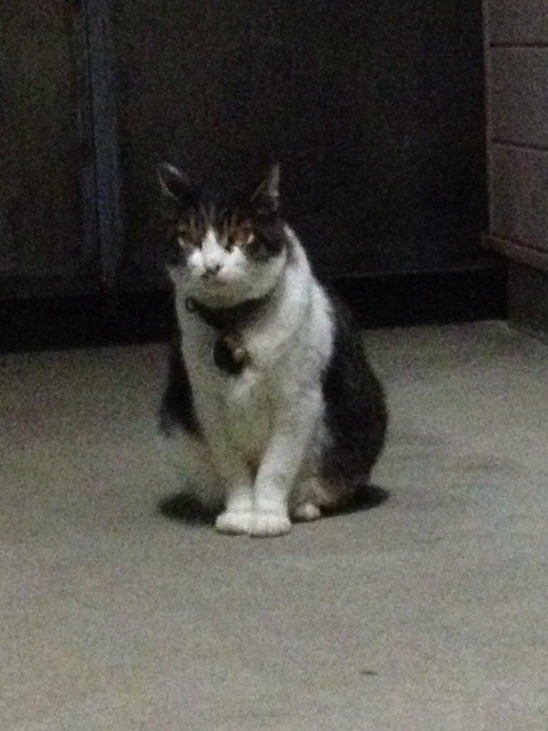 豊島区駒込に迷子猫がいます。どなたか探していませんか?