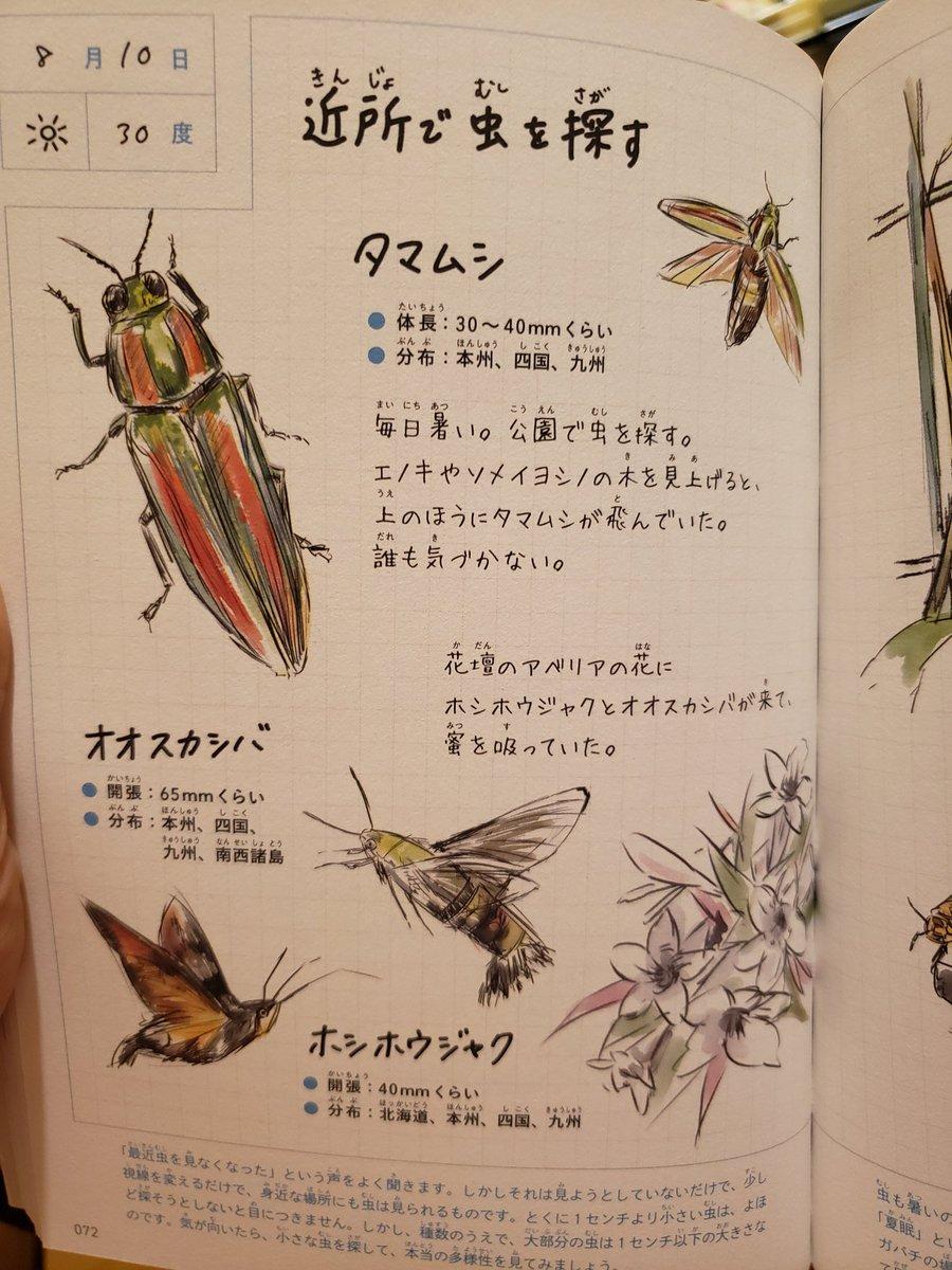 昆虫 は どこで 息 を し て いる