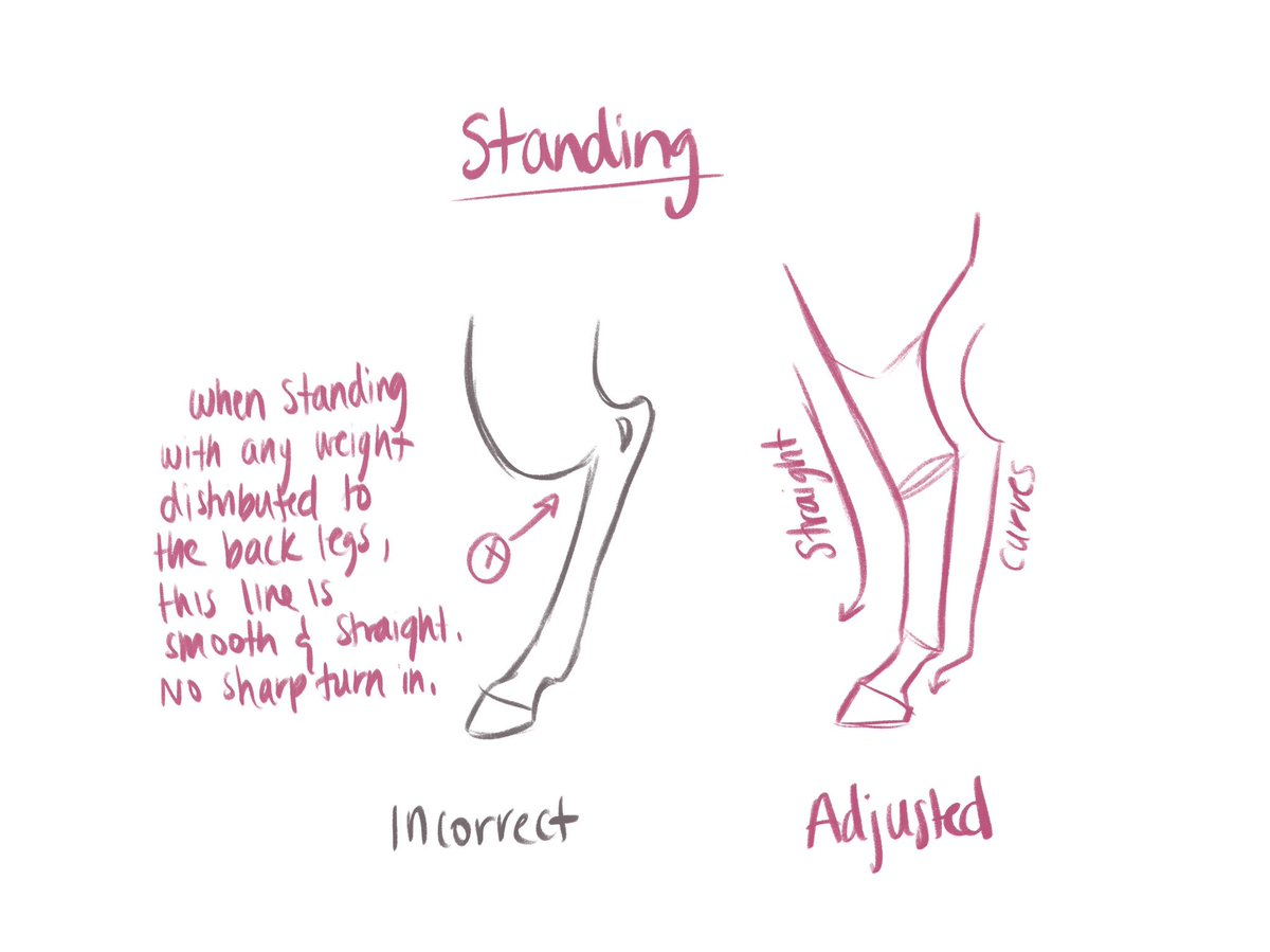 Ale Andria Ne Nakis On Twitter The Back Legs Of Horses Can Be Tough To Draw I Made These Simplified Notes Based On Common Mistakes I Ve Seen And Made Myself Note I M
