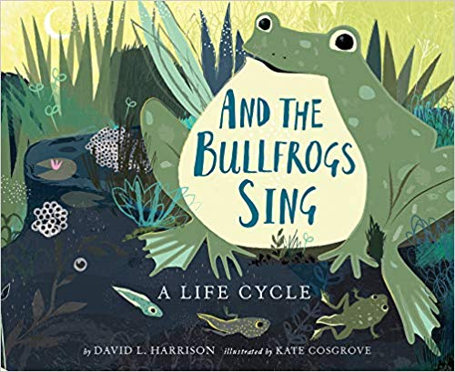 Rumm, rumm, rumm.  The bullfrogs call forms a chorus throughout this nonfiction picture book by David L. Harrison. Just finished reading And the Bullfrogs Sing.  #reading #picturebooks #frogs  Review: https://suebe2.wordpress.com/2019/07/16/and-the-bullfrogs-sing-by-david-l-harrison-illustrated-by-kate-cosgrove/…
