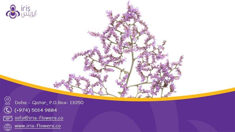 #Limonium_Overing #flowers #Purple from #Netherlands #SouthAfrica #Egypt #Turkey  #florist #Doha #Qatar  #IrisFlowersQa