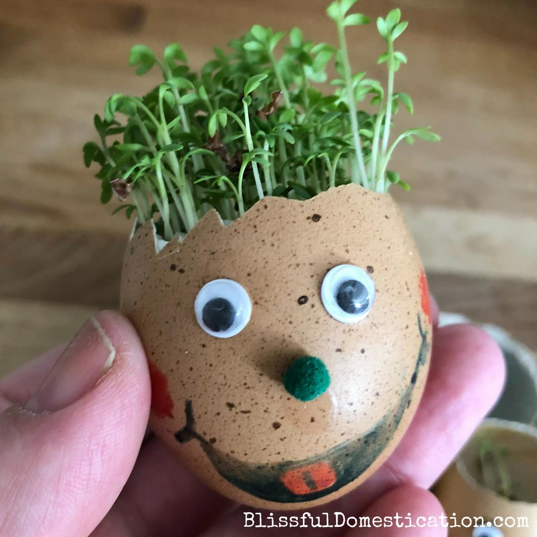This is a great activity for the kids, fun and educational. Growing your own Cress Egg Head! http://dld.bz/gGSeT  #kidscraft #kidsactivities #growyourown #learningthroughplay