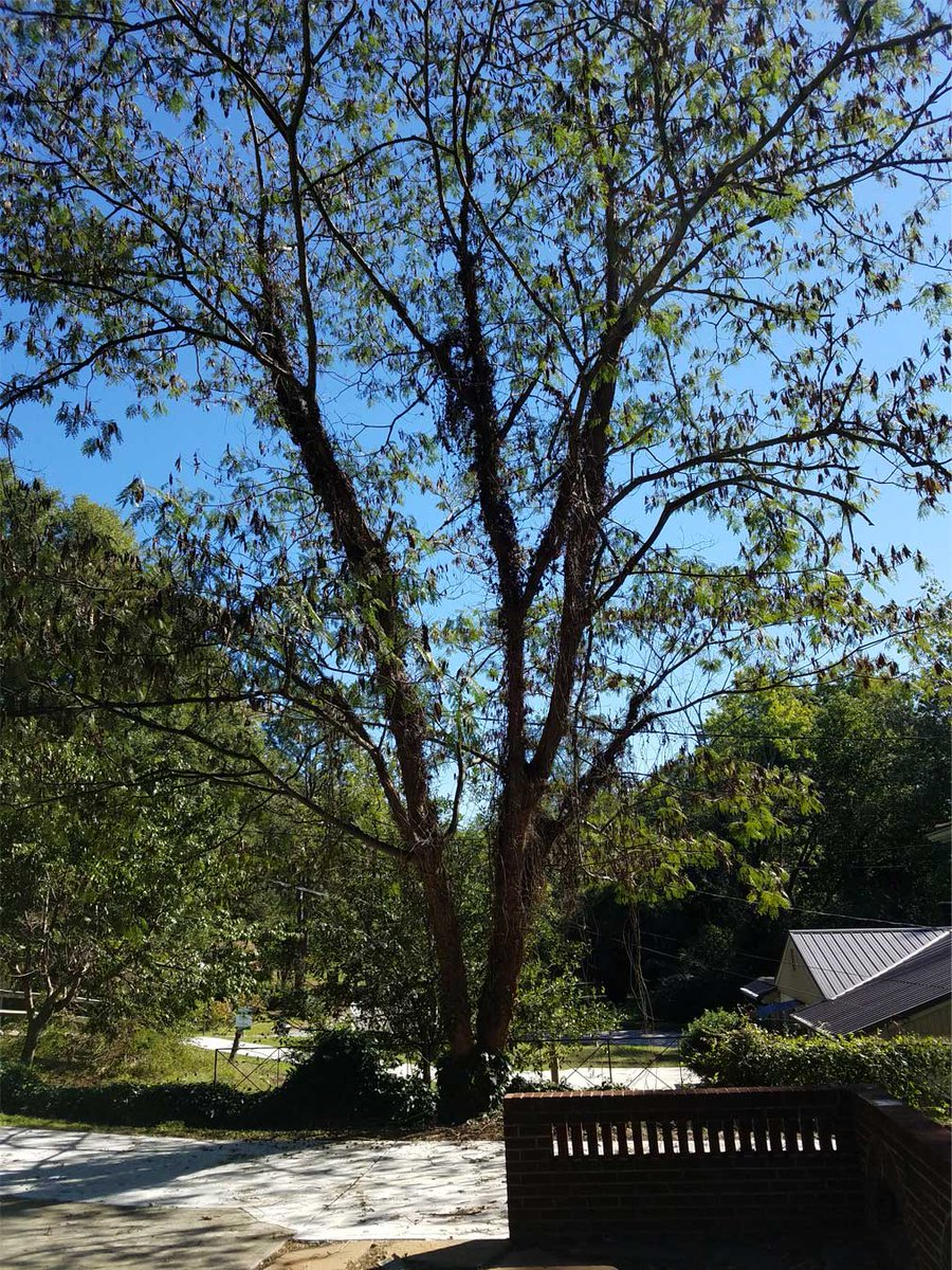 Need Emergency Tree Service? Our Tree Professionals are Available 24-7. Fully Insured & Certified, 20 Years Experience. Call Today for Free Quote! 404-754-5546 http://northatlantatreeservice.com #atlanta #georgia #alpharetta #johnscreek #roswell #dunwoody #buckhead #brookhaven #suwanee #atl
