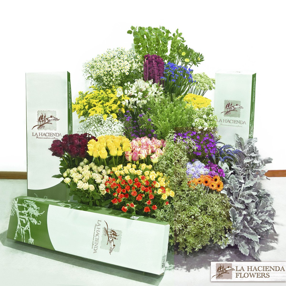 It's a lot of Fun for $99! Ask for our special sample boxes for new customers. From Ecuador to USA in just three days! #ecuadorianflowers #summerflowers #summer #sampleboxesx #lahaciendaflowers