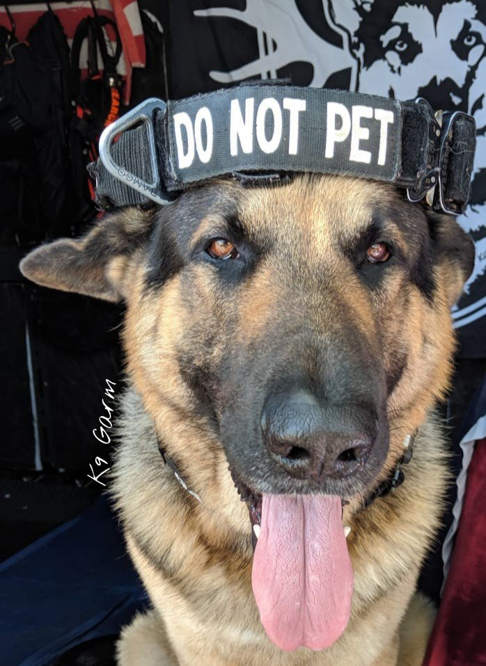 Perhaps wearing it like this might make it more obvious? #K9Garm #germanshepherd #gsd #moosedog #FaMoose #SARK9 #dogsoftwitter #dog #dogs #moosedog<br>http://pic.twitter.com/VjXVy4YJT1