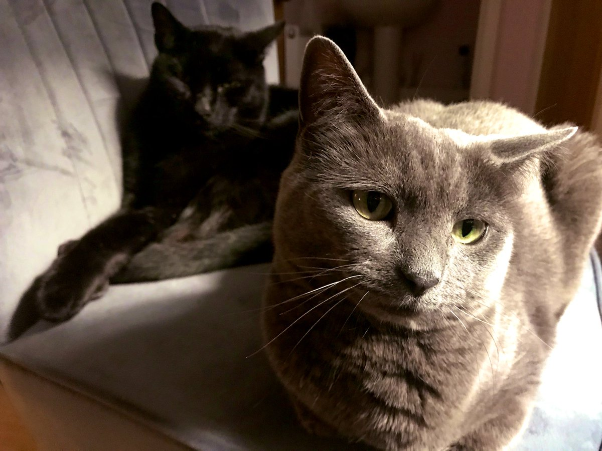 Personal space? What's that?! 🤣  #greycat #TunaTuesday