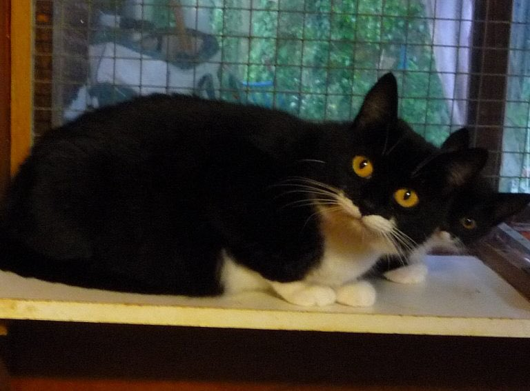 Gorgeous Maggie is only 18 months old and came to us heavily pregnant. She's now looking for a lovely home of her own. Could you #AdoptDontShop this sweetheart on #charitytuesday?<br>http://pic.twitter.com/dkLWkxQMLu