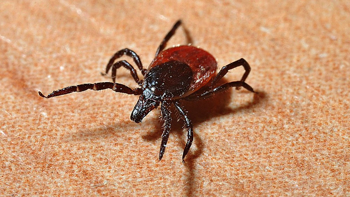 👀 Tick lodged in man's eye had to be pried off, made a 'little popping sound' 2wsb.tv/2JOptth