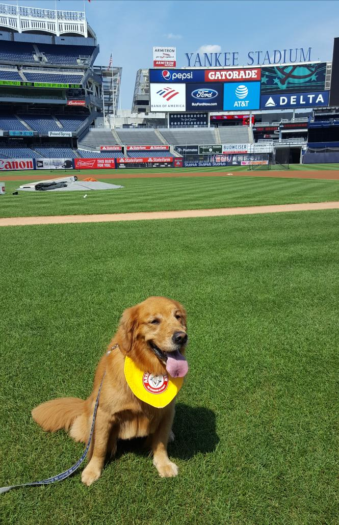 Just try to not smile at these photos of Rookie the bat dog visiting Yankee Stadium