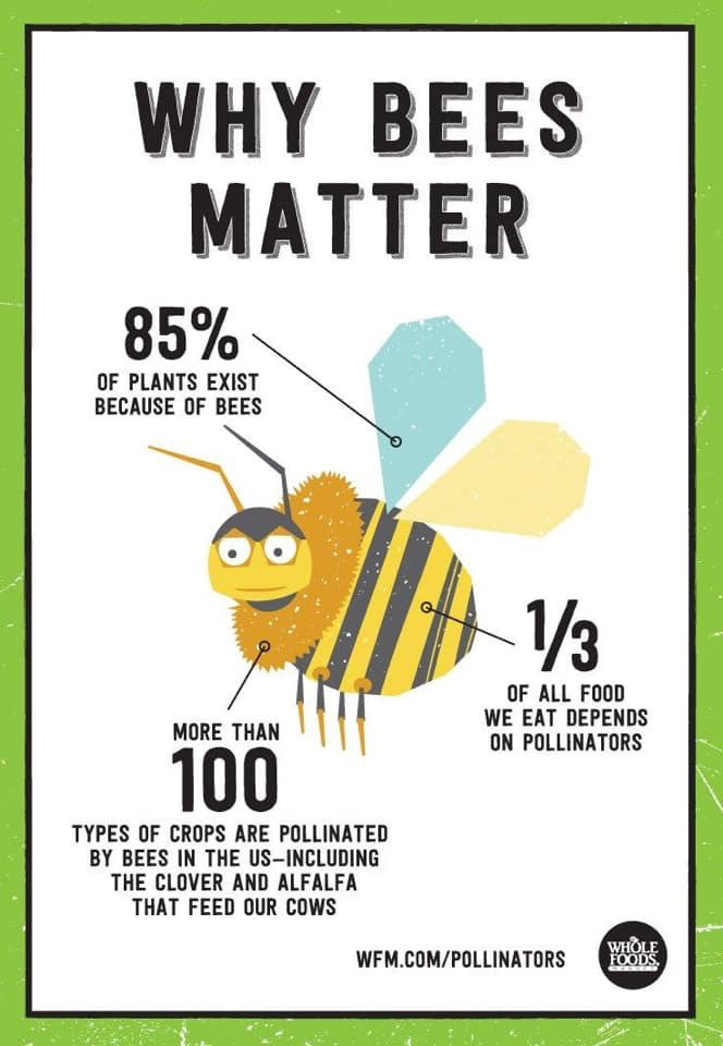 Bee's matter!#stemscopes #science