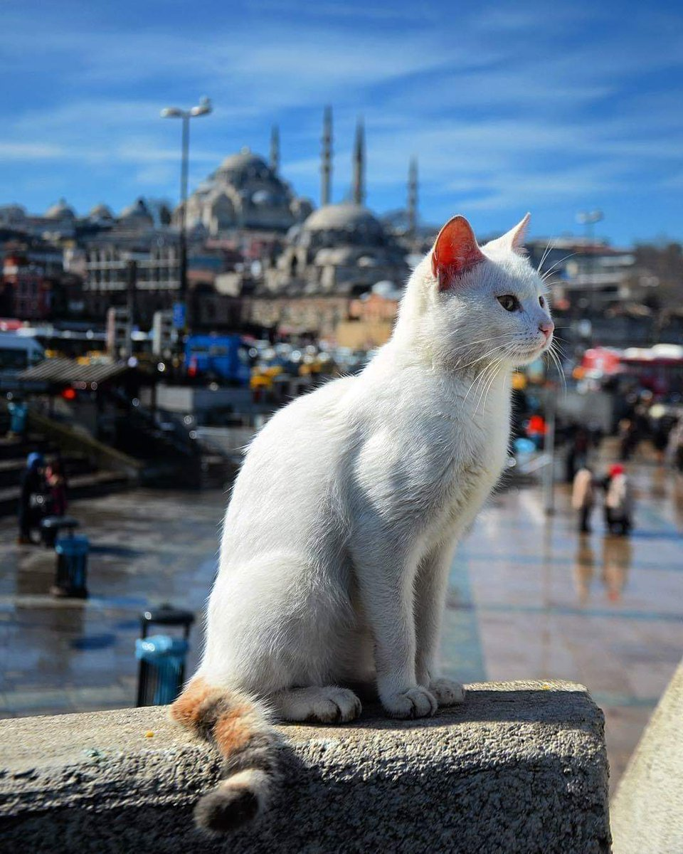 Greetings from Istanbul ...  <br>http://pic.twitter.com/wb9Blv0UNx