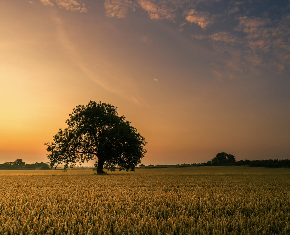 Today, sunrise was full of warmth and simplicity. The more images I take, the closer I get to contentment. Finding something you love doing and emersing yourself in it, has so many benifits.  #loveukweather  #WednesdayMotivation #WednesdayMotivation @ThePhotoHour<br>http://pic.twitter.com/UU0D7Yrj4W