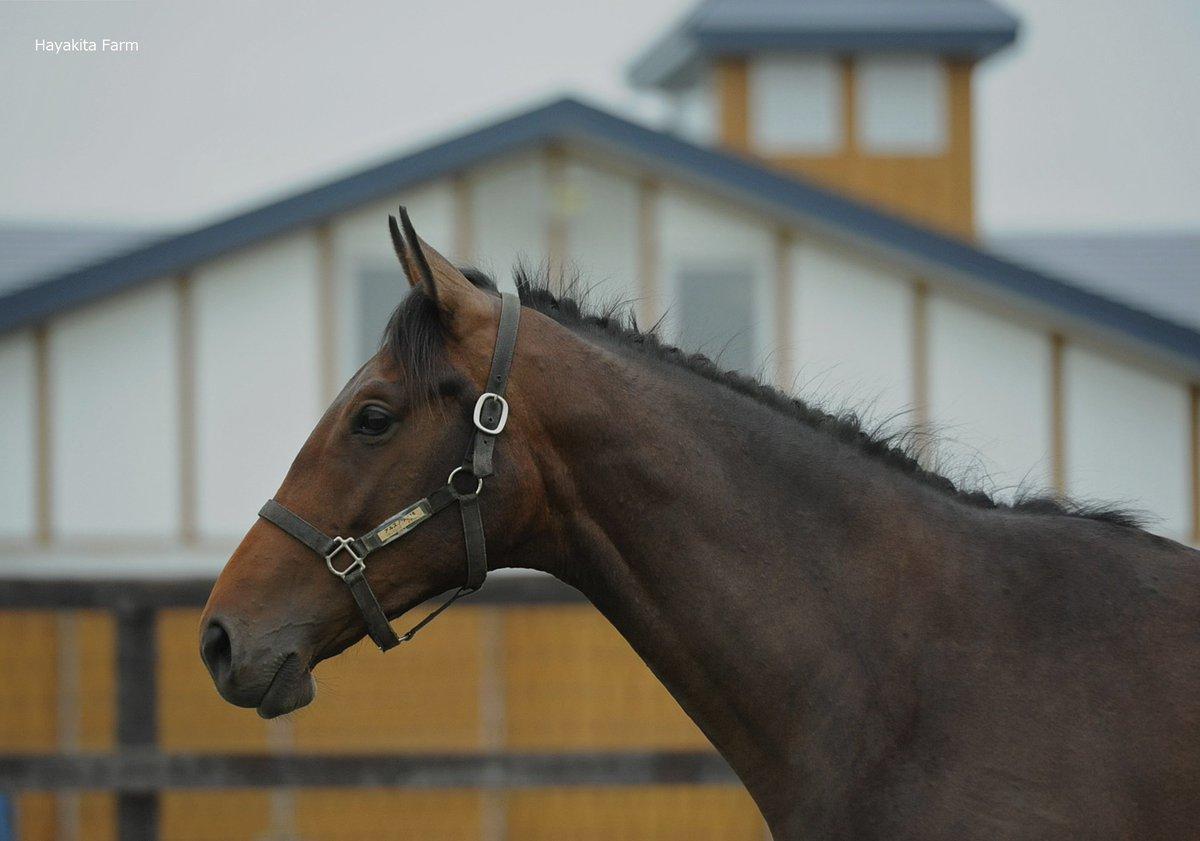 悠々として風格がありますね。存在感が頼もしい大型馬です(アルスノヴァの18・父リオンディーズ)