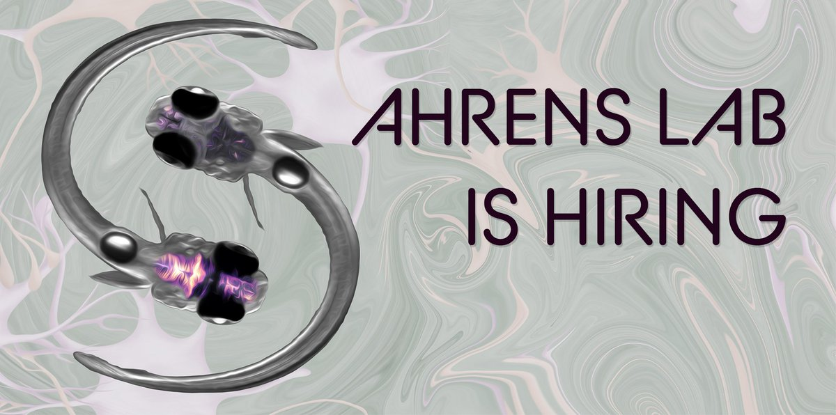 We have postdoc openings. Experimental & computational neuroscience, whole-brain imaging & analysis of distributed computations for behavior. Neuronal & astrocyte networks underlying brain states. Get in touch if interested & spread the word!   https:// ahrenslab.org     @HHMIJanelia <br>http://pic.twitter.com/hN2Dvy6n31