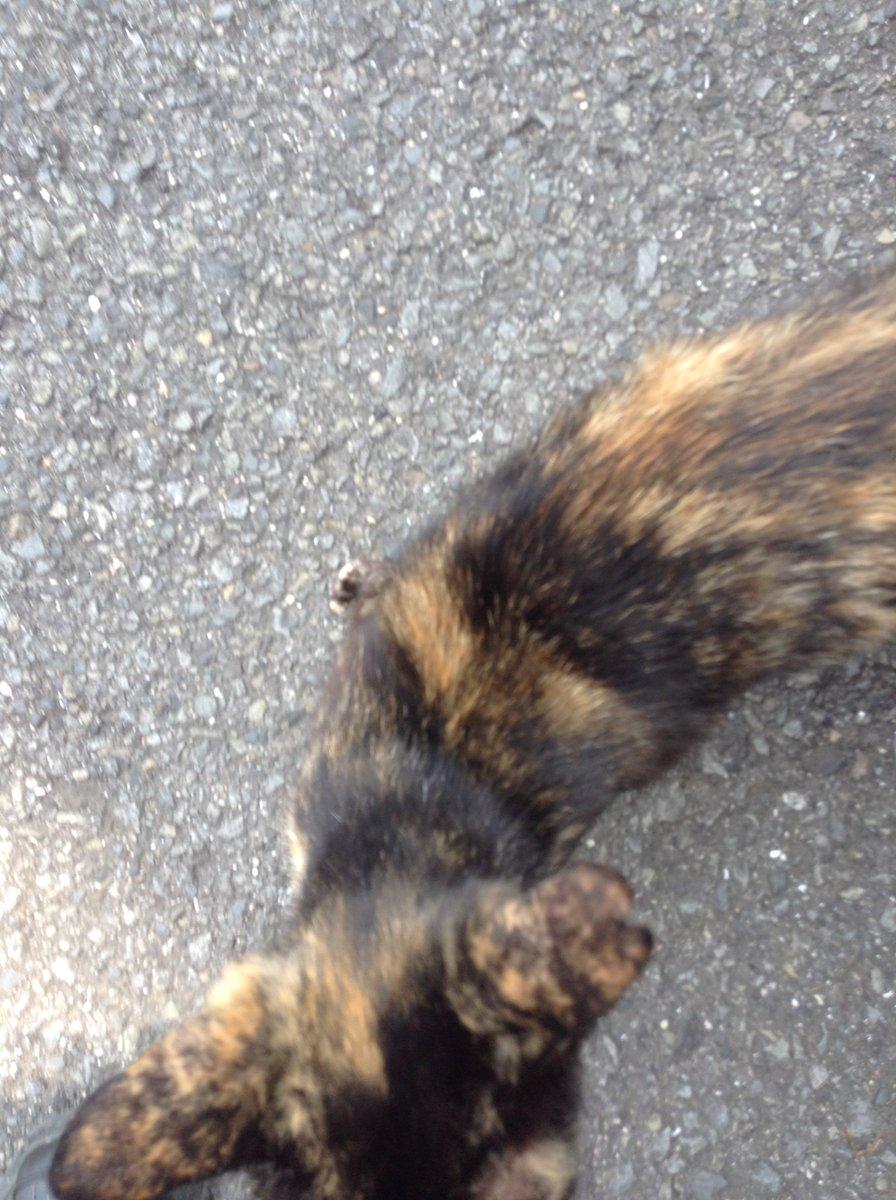 呼んだら足元に擦り寄ってくる野良猫が、ちっともじっとしていてくれないから、まともに写真が撮れなかった 😹 #失敗写真 #ねこ #猫
