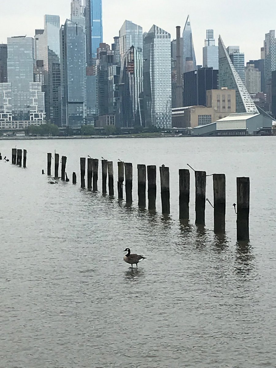 Meanwhile in New Jersey, a goose stands on the the Hudson River. <br>http://pic.twitter.com/rO2CR08oGZ