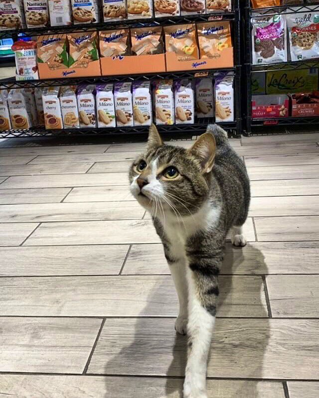 Bodega Cats (@Bodegacats_) on Twitter photo 2019-07-17 11:38:28