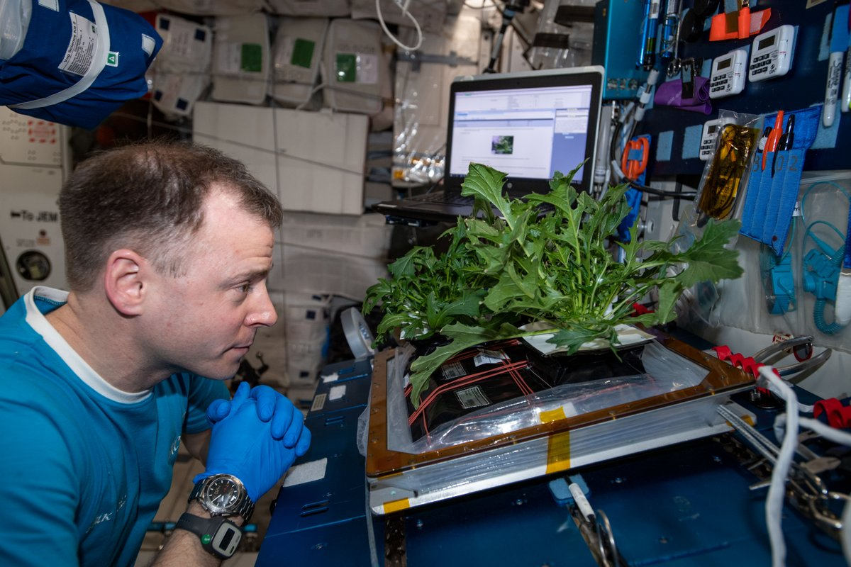 Find yourself someone who looks at you the way @AstroHague looks at the @Space_Station garden. 😍🔬🥗 We get it, Nick, #science is mesmerizing. Read more about how growing plants in space will contribute to our missions to the #Moon and beyond: http://go.nasa.gov/2XW63Md