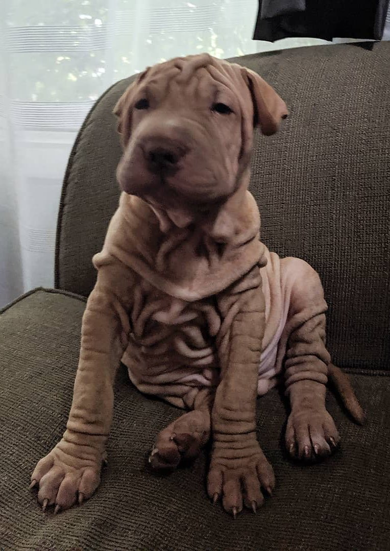 My nephew got a puppy for his wife. Any name suggestions?