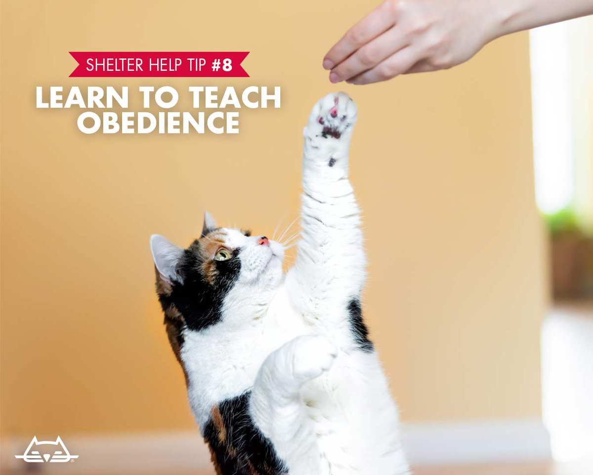 Help your local shelter by learning to teach obedience, and helping train their animals! This skill helps shelter animals woo the humans to adopt. Find more ways to help shelters at: bit.ly/2IBW3Q5