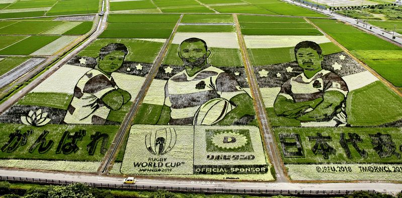 test Twitter Media - This rice field in Gyoda, Japan has been transformed into a stunning  piece of agricultural art to celebrate #RWC2019 👏👏👏 https://t.co/x3jyIikgLW