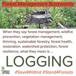 Image for the Tweet beginning: #SaveWildInd #Stand4Forests #Forests