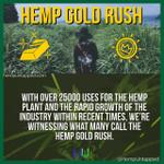 Image for the Tweet beginning: The Hemp Gold Rush has