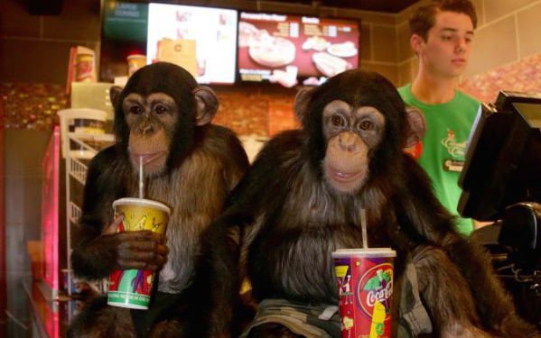 #CinemaScience via #BBC: How Chimpanzees Bond Over A Movie Together. Chimpanzees Get Same Sense Of Bonding & Closeness That Humans Can Feel From Watching Movie Or TV Show Together, Say Researchers At #DukeUniversity. (Just Don't Watch #PlanetOfTheApes!) https://www-bbc-co-uk.cdn.ampproject.org/v/s/www.bbc.co.uk/news/amp/education-49004326?amp_js_v=a2&amp_gsa=1&usqp=mq331AQDoAEG#referrer=https%3A%2F%2Fwww.google.com&amp_tf=From%20%251%24s …
