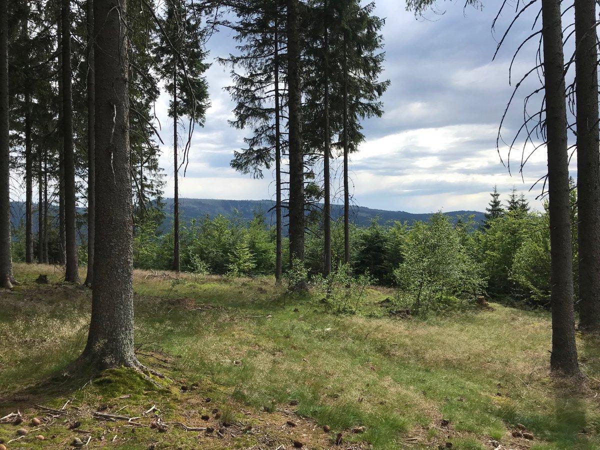 Putování Šumavou 1 #sumava #cesko #czechia #zemeceska #visitczechia #heritage #naturalpark #forest #plants #outdoors #visit #vylet #putovani #turistika #trip #travel #tourism