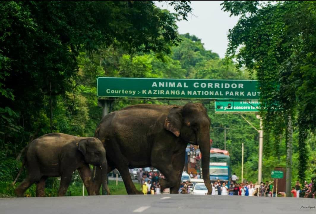 Devasted to see this. People of Assam near Kaziranga please drive safely and slowly as these beautiful animals have no where to go but on the roads 💔 praying hard for the rain to let up for them