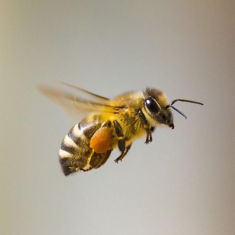 Картинка три пчелы