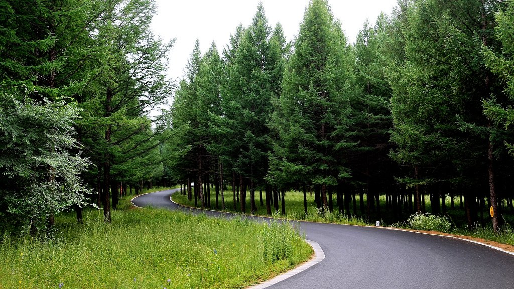 N #China's Saihanba: bounced back greener http://bit.ly/2JMNhh3
