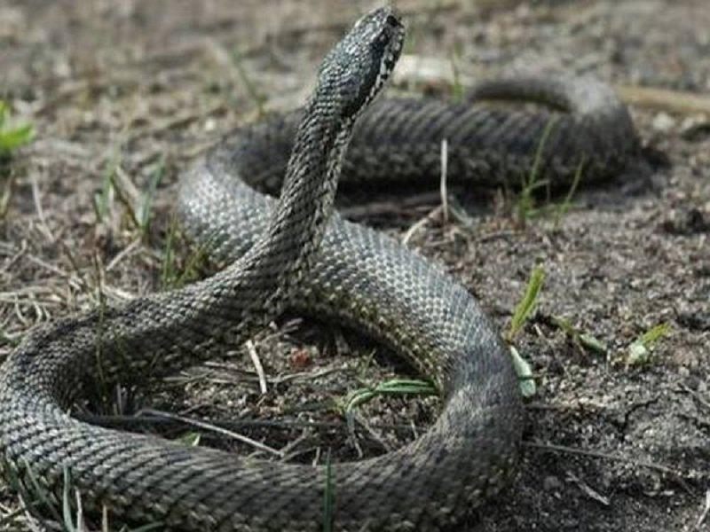 змеи в чувашии фото и названия размер, любой