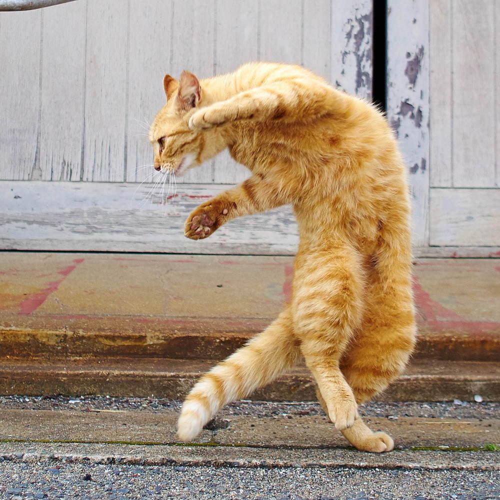猫の写真&グッズ展「ねこがかわいいだけ展」東京・大阪・横浜など全国7会場で開催 -