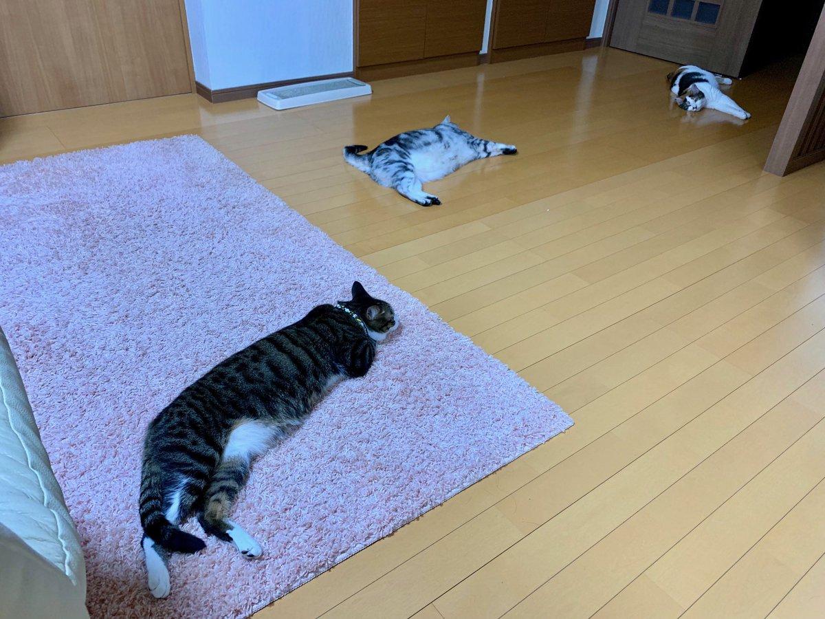 猫があちこちに落ちてる