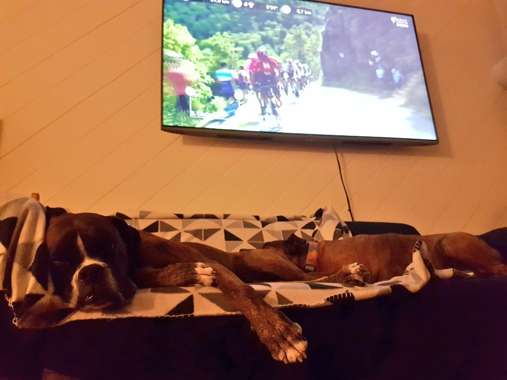 @CyclingCentral #couchpeloton #sbstdf Poursuivants vs Couch Peloton
