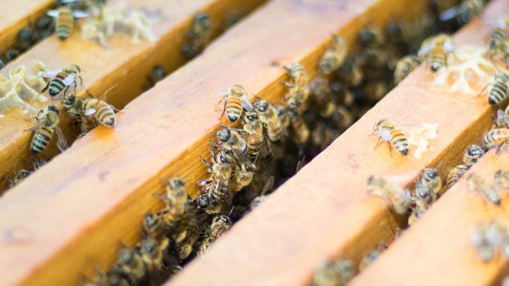 'Intensive' beekeeping does not increase the spread of disease, study finds • http://Earth.com https://www.earth.com/news/intensive-beekeeping-disease/… @BeesAndBaking @EarthDotCom