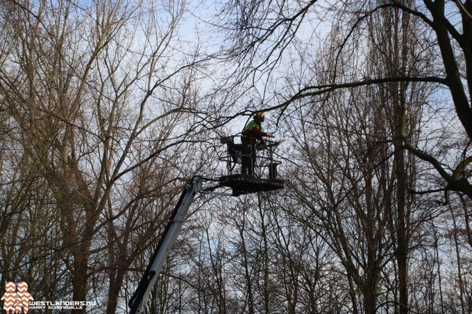 Periodieke controle van Maassluise bomen https://t.co/0TrnpGRqrX https://t.co/5XmyUKUX2u