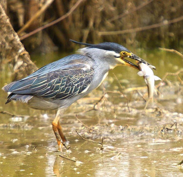 #travel #canon #bird #natgeo #bird_watchers_daily #canon80d #tourism #love #natgeotravelpic #natgeo_africa #natgeowild #natgeowild #canonphotography_ #birds #birdwatching #sudanese #natgeoadventure #natgeolandscape @canonusa @canonfrance #unsudan #un #usa #uae https://t.co/ByCTEVhWHn