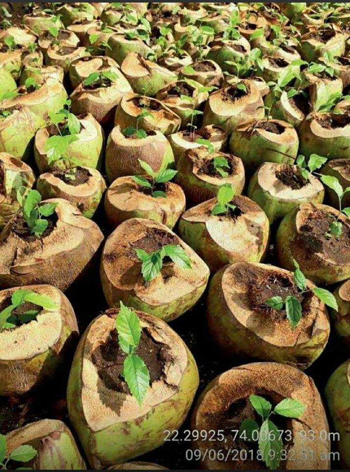 To reduce the use of plastic bags Forest Departments and other nurseries can start using coconuts to nurse their seedlings. - Recycle, Reduce and Reuse. @Waste360 and Environmental Management Services #ThursdayThoughts #ThursdayMotivation
