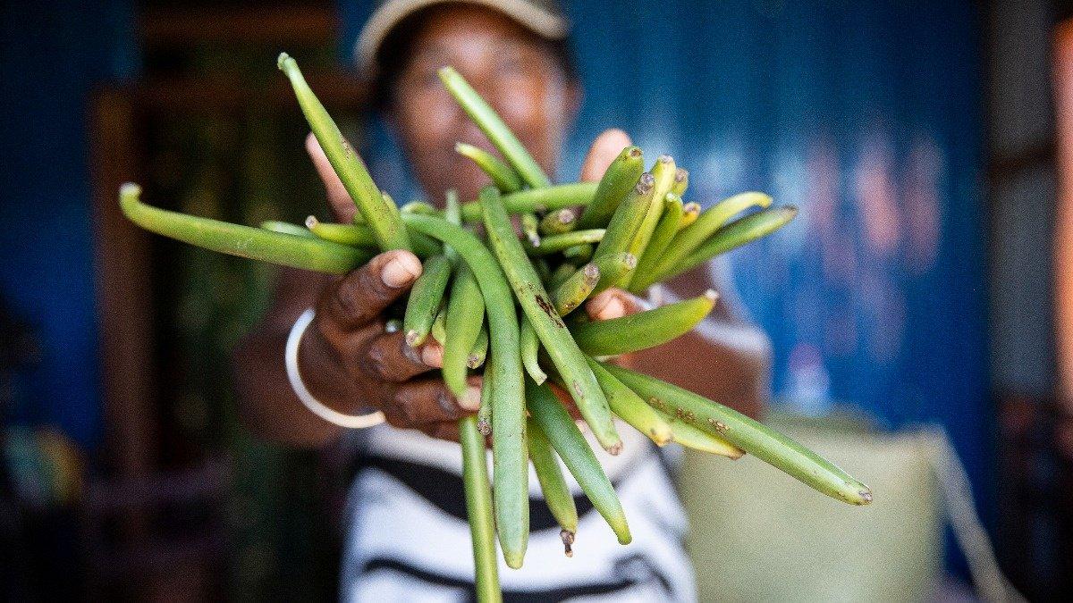 Madagascar's vanilla boom attracts villains https://reut.rs/2Y0WyXL
