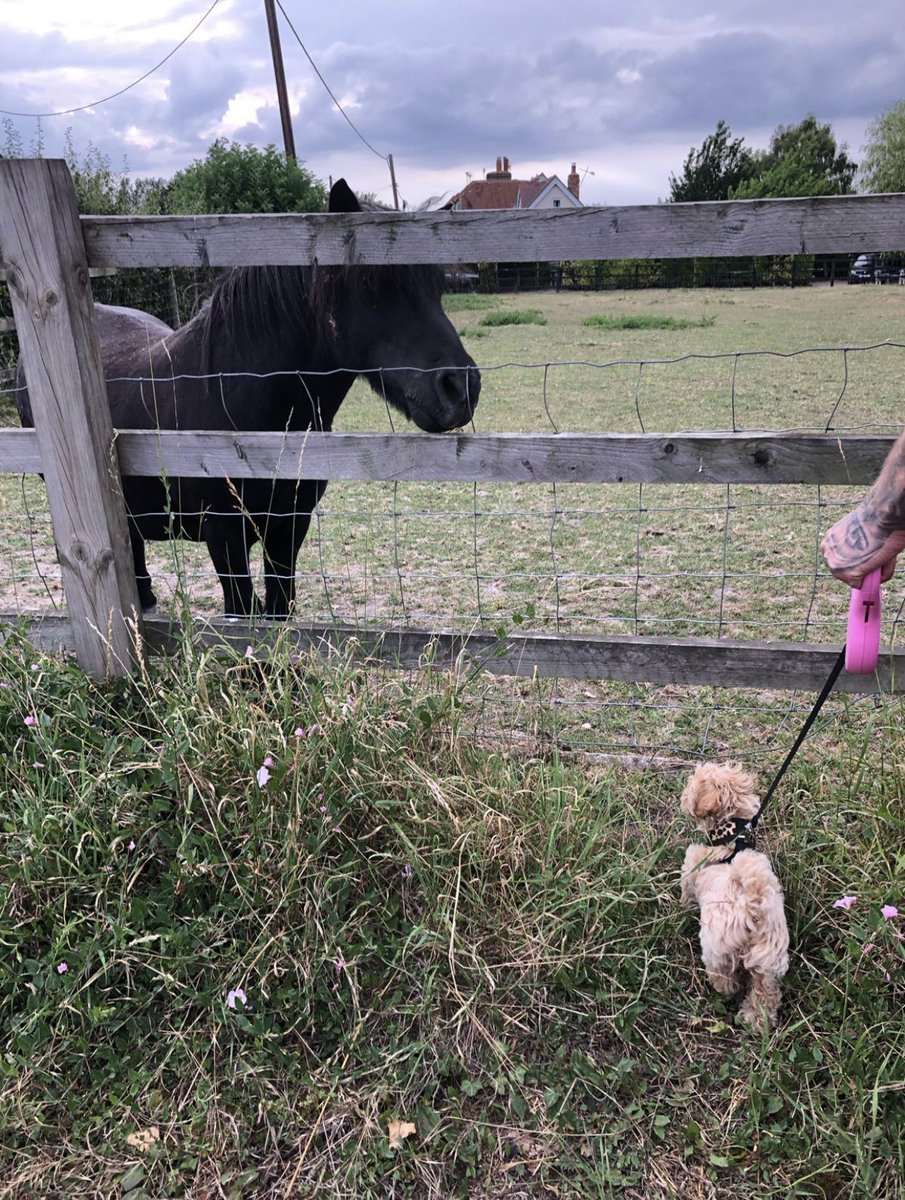 Lola's new mate.. 💕 Nothing beats living in the countryside! 😍 #LittleLola #Maltipoo #MaltipooPuppy