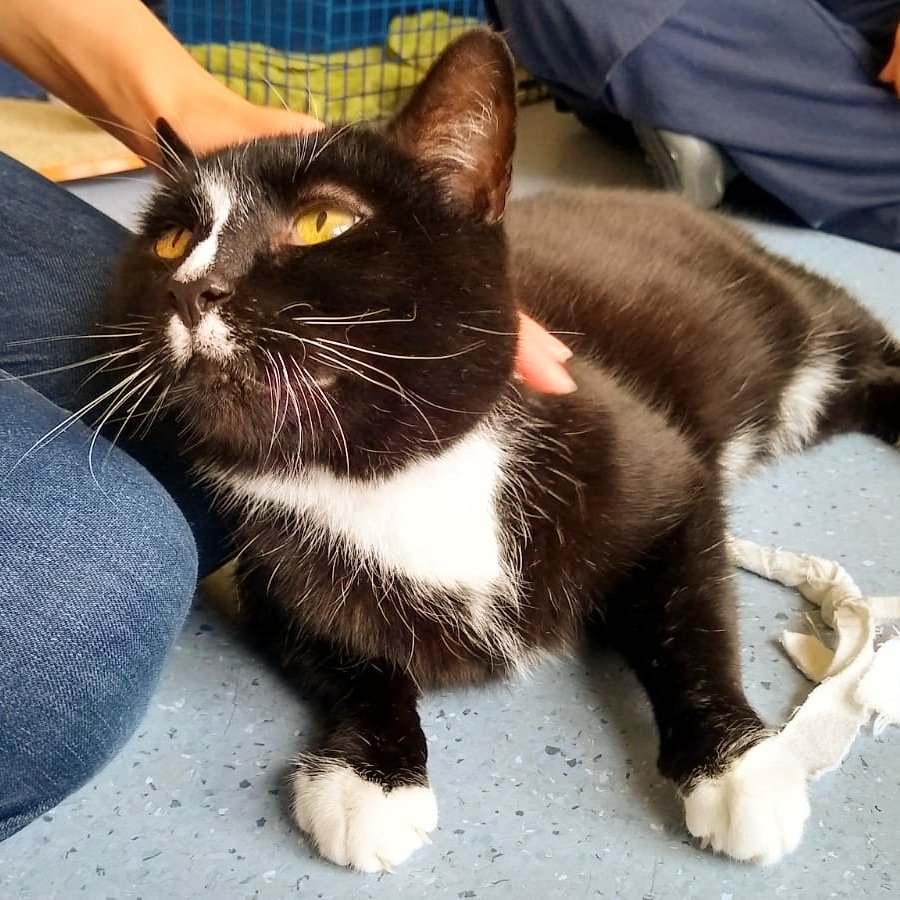 Coming home on Monday  thank you @CatsProtection #cats #rescuecats #AdoptDontShop every day will be #Caturday for me soon and I can't wait<br>http://pic.twitter.com/xOClRphO7s