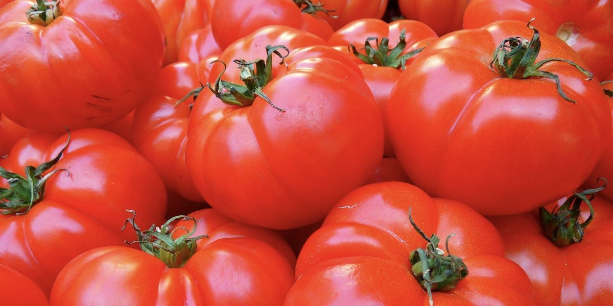Tomatoes are rich in lycopene, flavonoids and other phytochemicals which have anticarcinogenic properties. #tomatoes are an excellent source of #VitaminC with most of it coming from the jelly-like substance that surrounds the seeds.   #eatwell #eathealthy  #fitnessjourney <br>http://pic.twitter.com/nXekJs8aJS