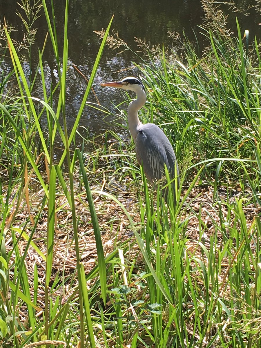 Met this handsome chap along the canal towpath at lunchtime today.