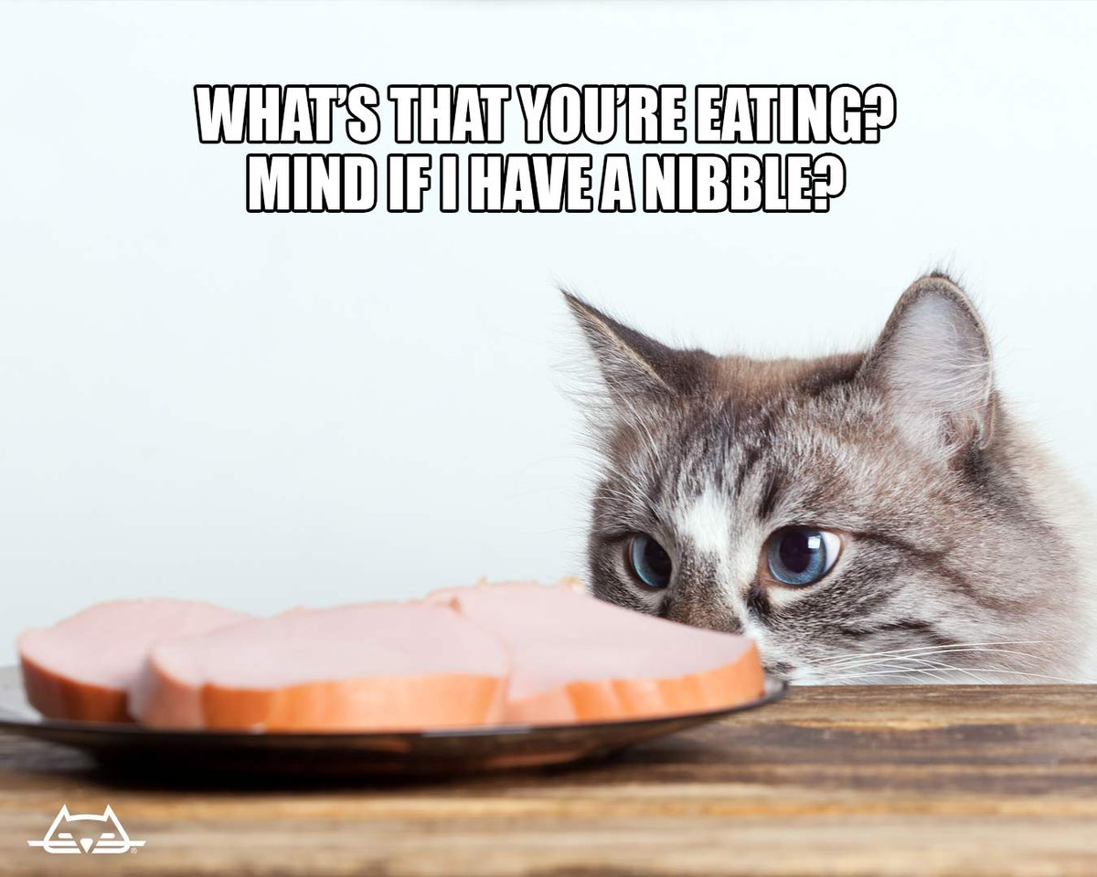 Why does your plate smell better than my food dish?