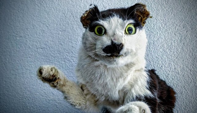 My freeze-frame close-ups on the best FX and Easter Eggs in the #Cats trailer.<br>http://pic.twitter.com/tqClVHL4gN